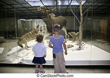 博物館, 自然, 子供