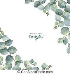 卡片, 桉树, 分支, 背景。, 矢量, 美元, watercolor, 植物群, 离开, 隔离, 白色, 银, 绿色