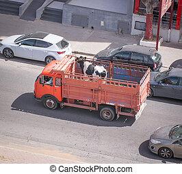 卡車運輸, 母牛