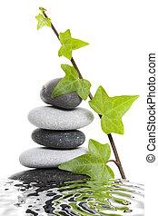 卵石, 堆, 常春藤
