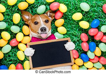 卵, イースター, うさぎ, 犬