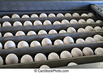 卵, 流れ作業, パッキング