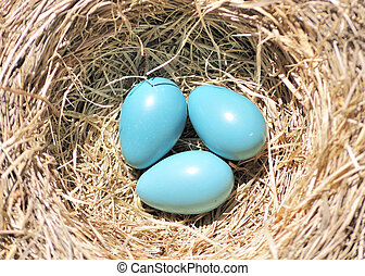 卵, 3, ロビン
