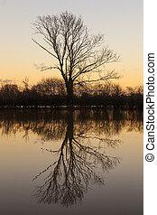 反射, 木, 湖, 日没, ∥あるいは∥, 日の出