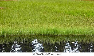 反射, 草, 湖