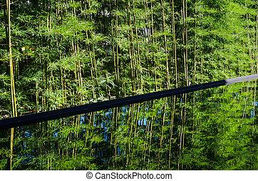 反映しなさい, 水, 竹