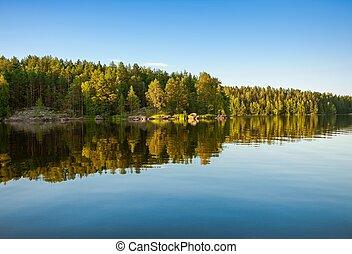 反映, 湖の 森林