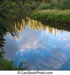 反映, taiga, 森林, mashland, 池塘, 育空河