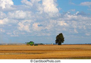 収穫する, 季節