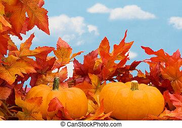 収穫, ボーダー, 秋