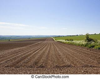 収穫, ポテト, 新たに, 植えられた