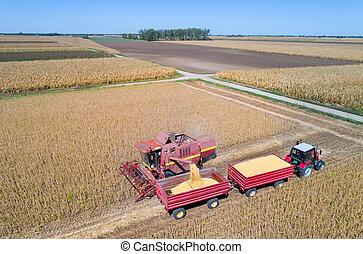 収穫, 無人機, シュート, 大豆