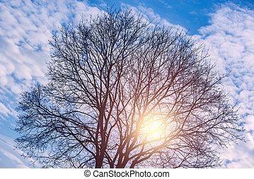 发光, 太阳, 通过, the, 树, crone.