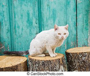 受傷, 貓, 在上方, 樹干, 以及, 綠色, 木制的門