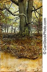 古い木, 上に, a, グランジ, 背景