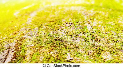 古い, ぼんやりさせられた, バックグラウンド。, 木。, 緑, こけ, トランク