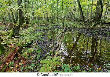 古い, オーク・ツリー, 水, 森林, 秋
