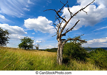 古い, 乾きなさい, 木, 上に, 美しい, 空