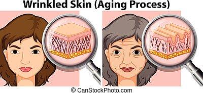 古い 女性, 若い, 皮膚