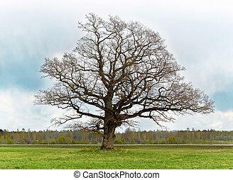 古い, 孤独, 木