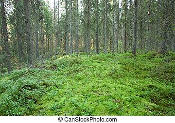 古い, 森林, こけ