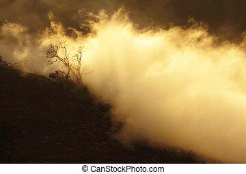 古い, 霧, 木