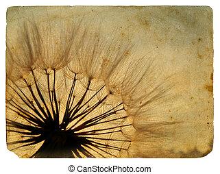 古い, dandelion., postcard.