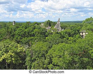 古い, peten, 上に, ジャングル, guatemala, maya, tikal, 台なし, 光景