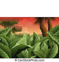 古代, ジャングル