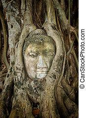 古代, 中で, 木, 仏, 絡ませられた, タイ, 定着する