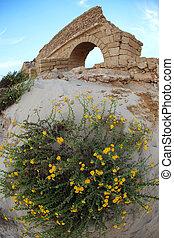 古代, 古い, 水路, 花, 地中海, ceasarea, ローマ人, 海 海岸