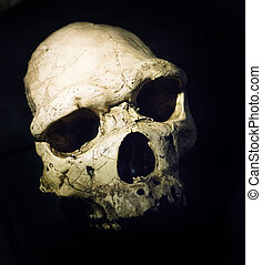 古老, 頭骨