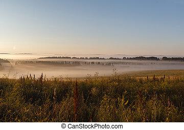 可以, 太阳, 雾, 领域