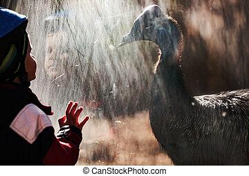 可愛, 小男孩, 在, 動物園, 施催眠術, 所作, cassowary