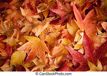 叶子, 在中, 秋季