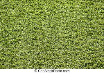 合成物, 草
