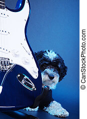 吉他, 工作室, 狗