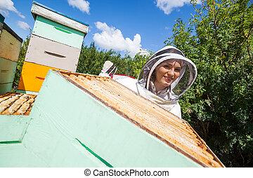 同僚, 養蜂家, apiary, 女性, 仕事