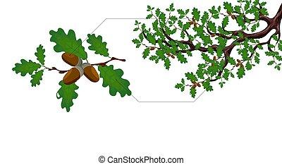 向上。, 分開, 橡子, 橡樹, 大, 綠色, 插圖, 分支, 關閉, 枝杈