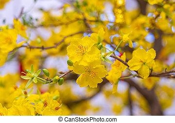 咲く, ベトナム, ばねの時間, 花, の間, 花, アプリコット, 美しい