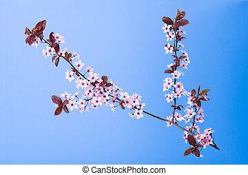 咲く, 木の枝, 上に, 青