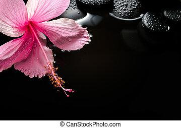 咲く, 禅, ハイビスカス, ピンク, 低下, 石, エステ, 概念