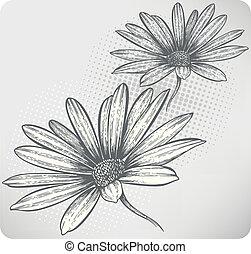 咲く, osteospermum, 花, 手
