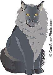 品種, メインのcoon 猫