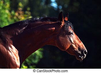 品種, 動きなさい, 暗い, 肖像画, 馬, ligth, 側