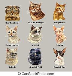 品種, 2, セット, 肖像画, ネコ