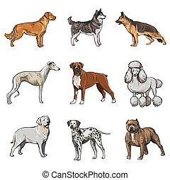 品種, collection., ベクトル, 犬, illustration.