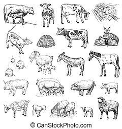 哺乳動物, 圖畫, 手