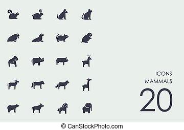 哺乳動物, 集合, 圖象