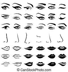 唇, セット, 鼻, 人間, 目